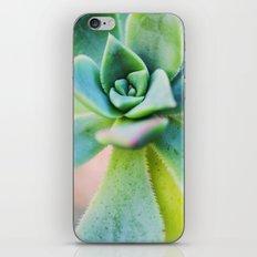 Echeveria iPhone & iPod Skin