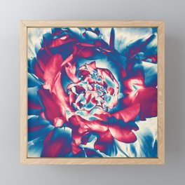 Fantasy flower garden. Color explosion. Abstract blooming blue and red summer peony flower. Lovely glamorous moody artistic floral botanical design. Beauty of nature. Framed Mini Art Print