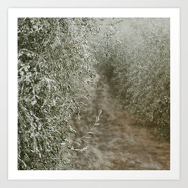 Tuscan Olive Grove Art Print