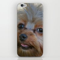 yorkie iPhone & iPod Skins featuring Little Yorkie by IowaShots