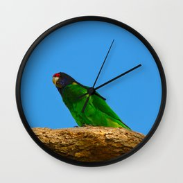 An Australian Ringneck Parrot Perched On A Branch Wall Clock