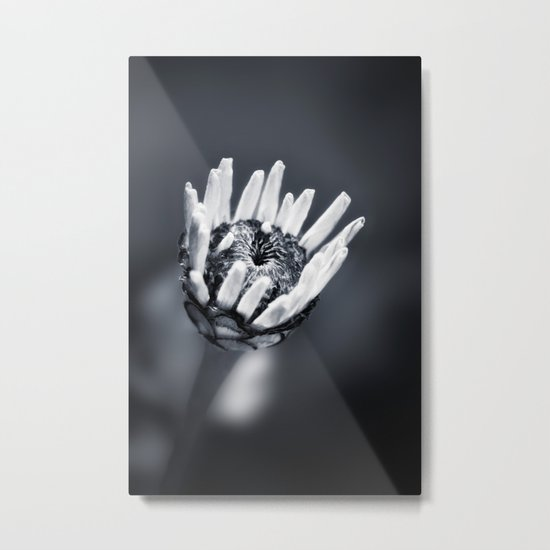 LIFE IN MONO - FILIGREE Metal Print