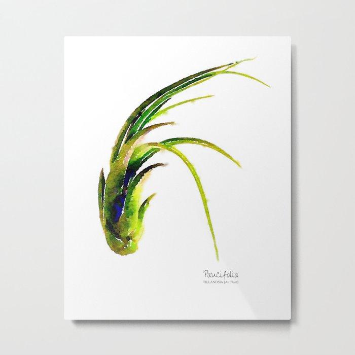 Tillandsia Paucifolia Air Plant Watercolors Metal Print
