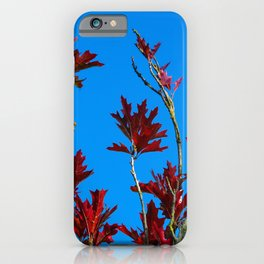 Autumn Leaves on a Young Oak iPhone Case