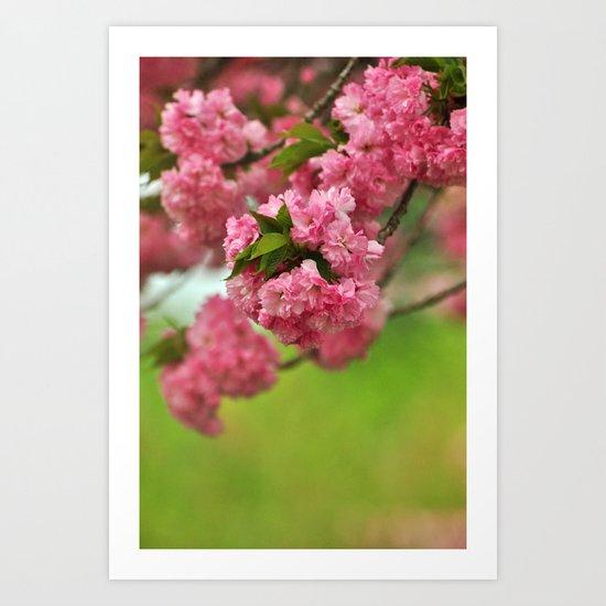 Cherry Orchard Art Print