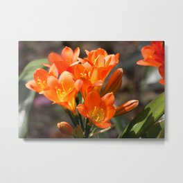 Bright Orange Clivia Metal Print