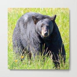 Alaskan Black Bear II Metal Print