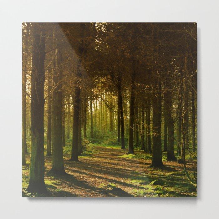 Woodland Tranquility Metal Print
