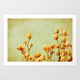 wednesday's magnolias Art Print