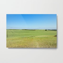Field with cereal Metal Print
