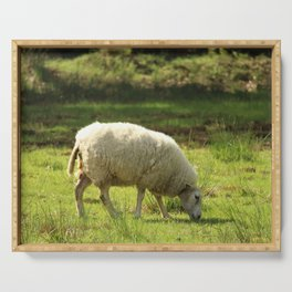 Grazing White Sheep Serving Tray