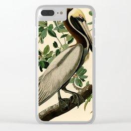 Brown Pelican (Pelecanus occidentalis) Scientific Illustration Clear iPhone Case