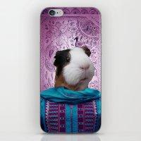 guinea pig iPhone & iPod Skins featuring Bollywood Purple Guinea Pig  by Sarina Saddiq