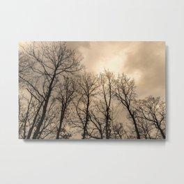 Creepy naked trees Metal Print