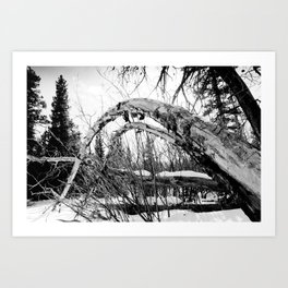 Bent Tree Art Print