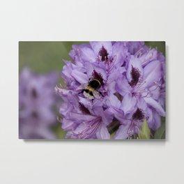 Patagonian bee Metal Print
