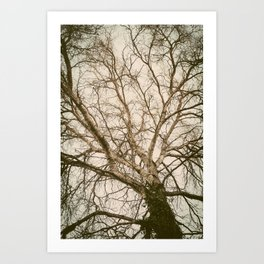 Roots To the Sky Art Print