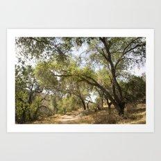 Follow The Tree Lined Trail Art Print