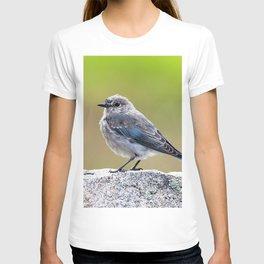 Watercolor Bird, Mountain Bluebird 03, Moraine Park, RMNP, Colorado T-shirt