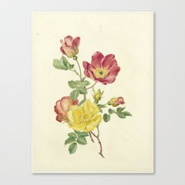 Antoinette Luden - Twig wild roses Canvas Print