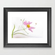 Coreopsis Rosea Framed Art Print