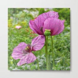 Violet Poppies / Purple Poppies Metal Print