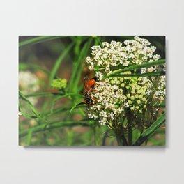 Wasp 1795 Metal Print