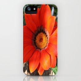 Close Up of a Beautiful Terracotta Gazania Flower iPhone Case
