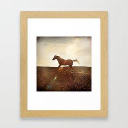 Horse In Landscape Framed Art Print