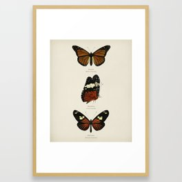 Different types of butterfly illustrated by Charles Dessalines D' Orbigny (1806-1876) 7 Framed Art Print