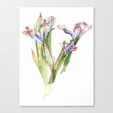 Dying Iris Canvas Print