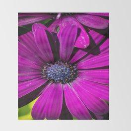 Purple Osteospermum Flower Throw Blanket