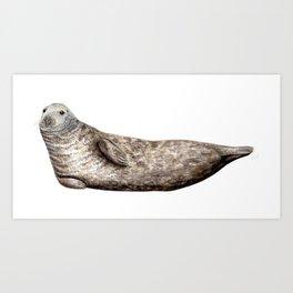 Grey Seal (Halichoerus grypus) Art Print