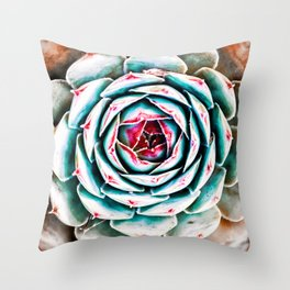 Beautiful colorful sempervivum succulent houseleek plant in spring Throw Pillow