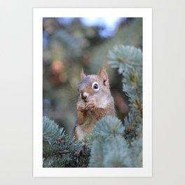Mr. Squirrel ~ I Art Print
