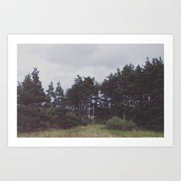 A copse of pines Art Print