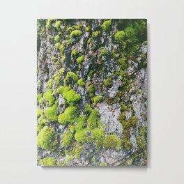 Moss | Columbia Gorge Metal Print