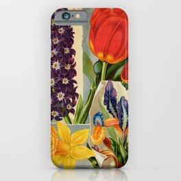 garden 003 Hyacinthus  Narcissus  Tulips  Iris5 iPhone Case