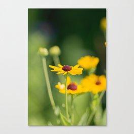 Portrait of a Wildflower in Summer Bloom Canvas Print