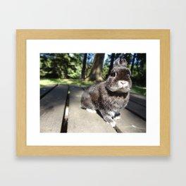 Nature Bun Framed Art Print