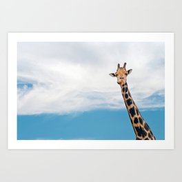 Giraffe neck and head against the clear blue sky Art Print