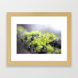 Mossy thoughts Framed Art Print