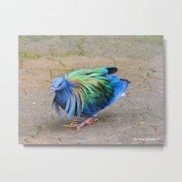 Nicobar Pigeon Strut Metal Print
