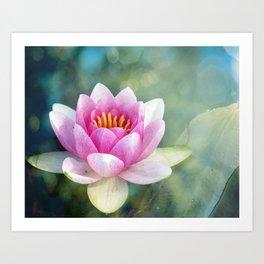 Dreamy Water Lily Art Print