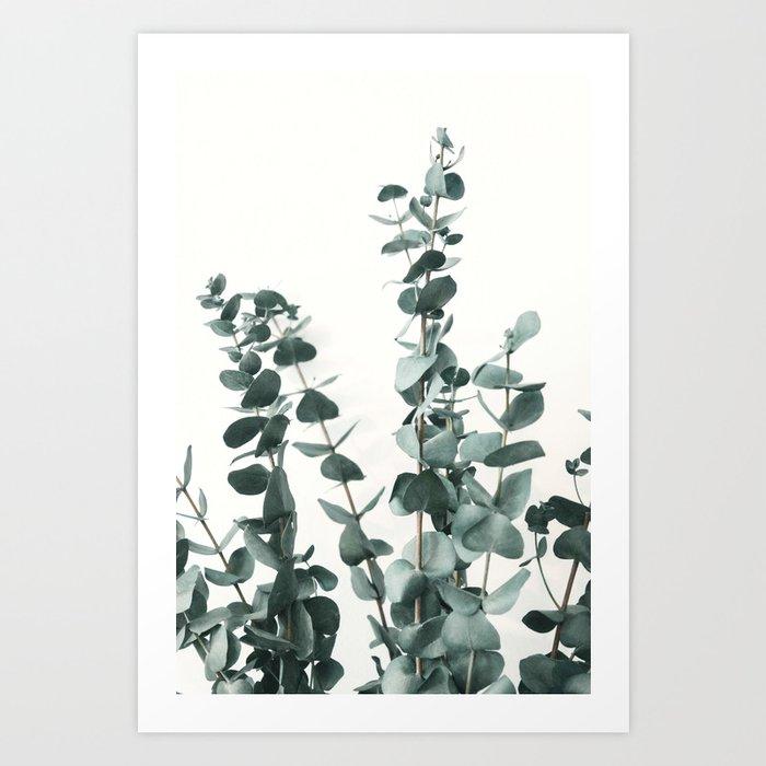 Eucalyptus Leaves Kunstdrucke