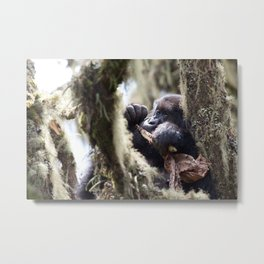 Wild mountain gorilla in the jungle of Virunga National Park, Rwanda | Travel photography Africa Metal Print