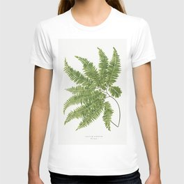 Adiantum Curvatum from Ferns British and Exotic (1856-1860) by Edward Joseph Lowe T-shirt