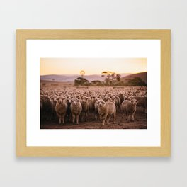 Dinner Time Sheep Framed Art Print