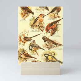 William Playne Pycraft - A Book of Birds (1908) - Plate 26: Some Perching- or Song-birds Mini Art Print