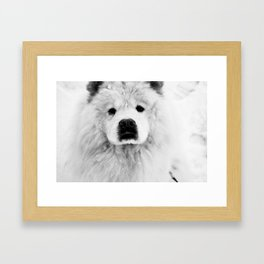 Molly the Chow Chow Framed Art Print